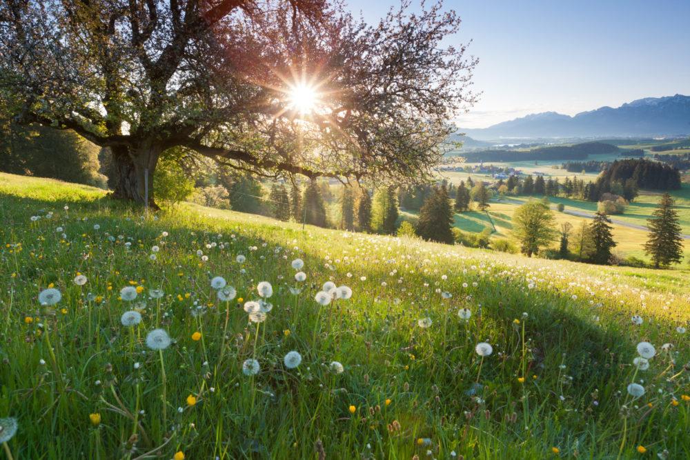 Sommer-Wiese in Bayern bei Sonnenschein